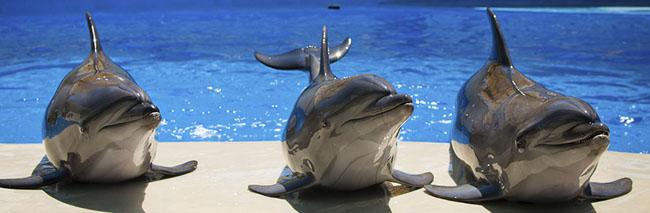 Дельфины в Немо