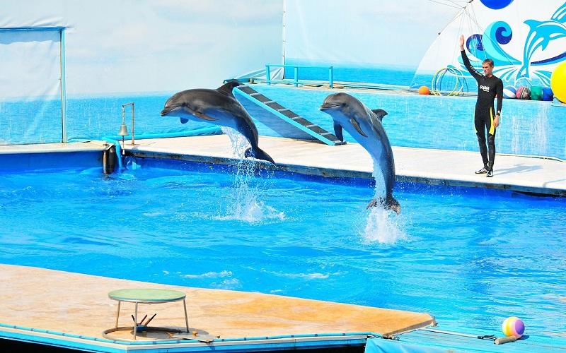 Дельфинарий
