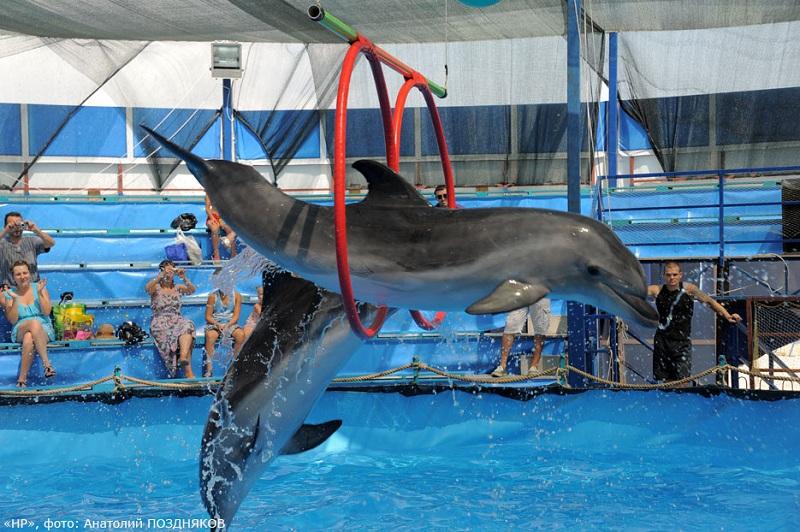Новороссийский дельфинарий