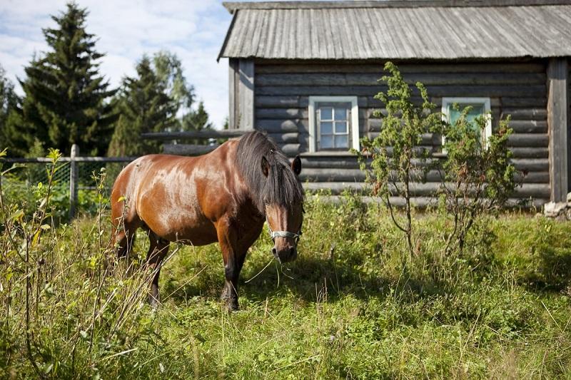 Национальный парк Водлозерский вид