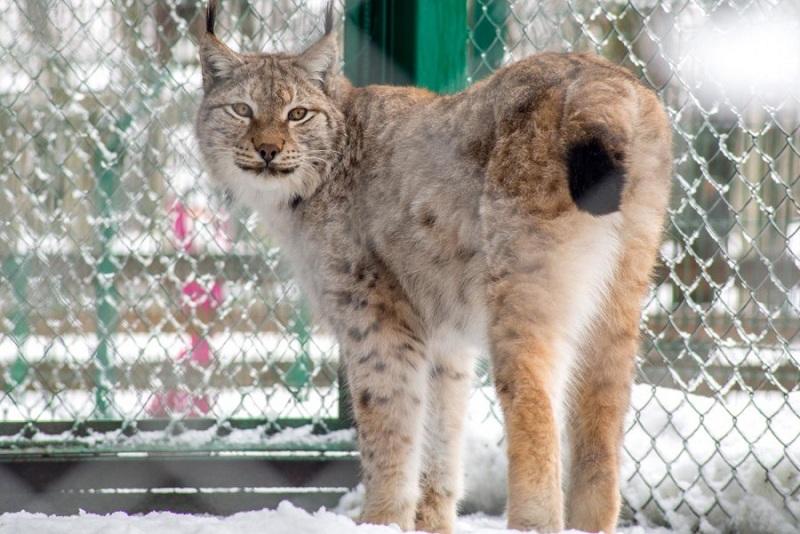 Вольерный комплекс Кавказского зоопарка