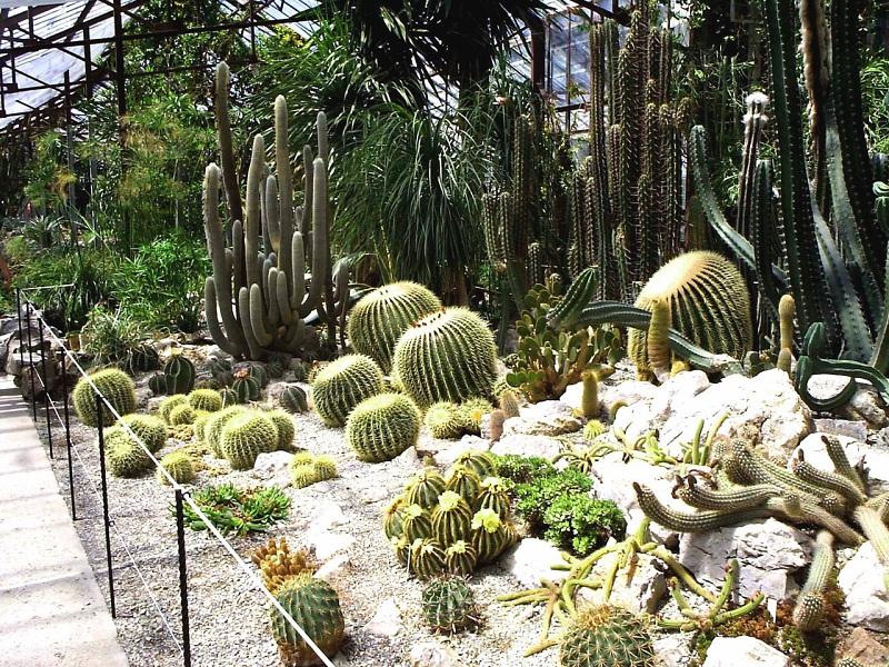 Никитский ботанический сад кактусы