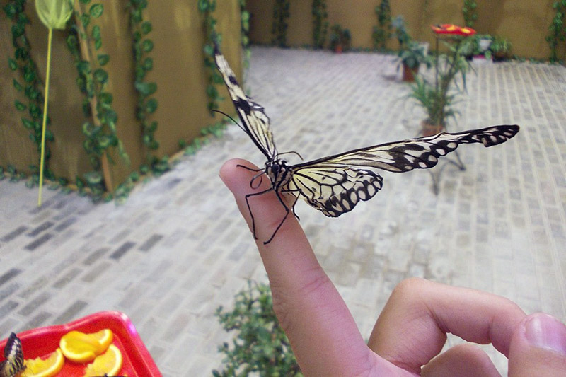 Голубицкая Ферма бабочек