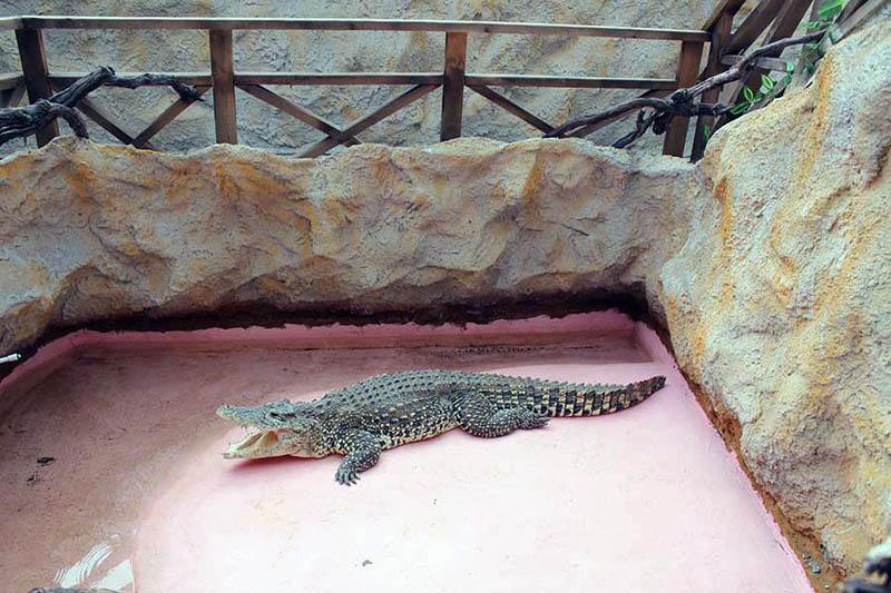 Голубицкая Крокодиловая ферма