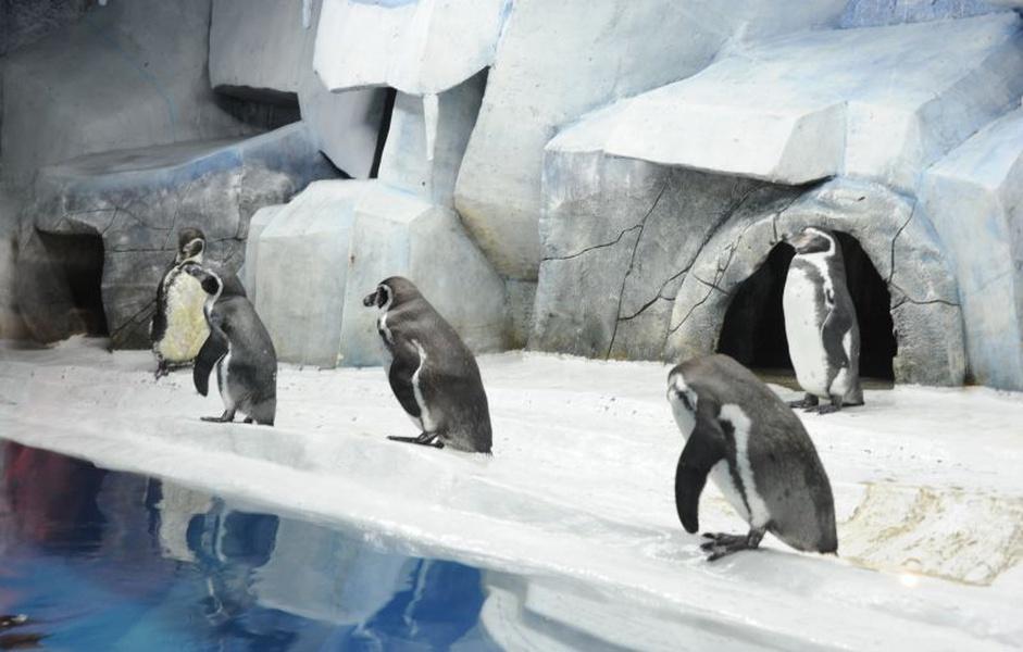 Сочи пингвинарий