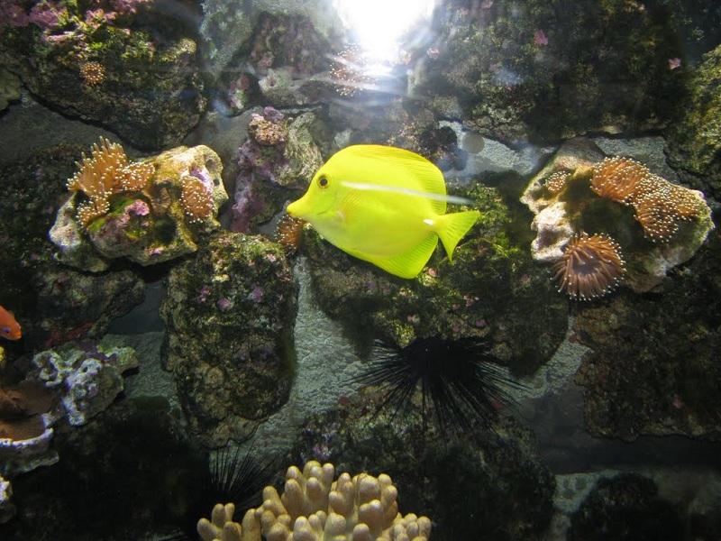 Сочинский дендрарий аквариум