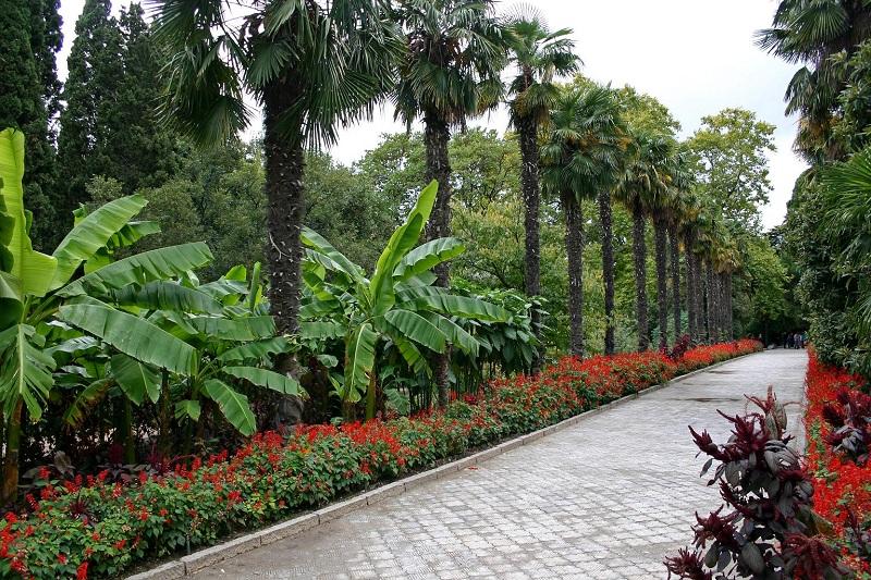 Никитский ботанический сад аллея