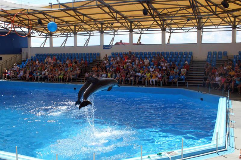 Голубицкая дельфинарий