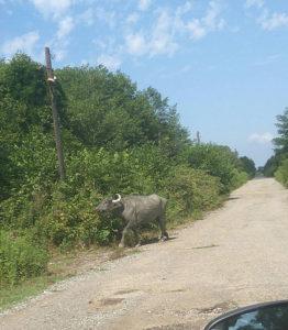 На автомобиле из России в Абхазию: фотоотчет и отзыв
